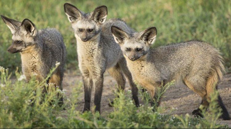 Predators Interaction Safari in Tanzania