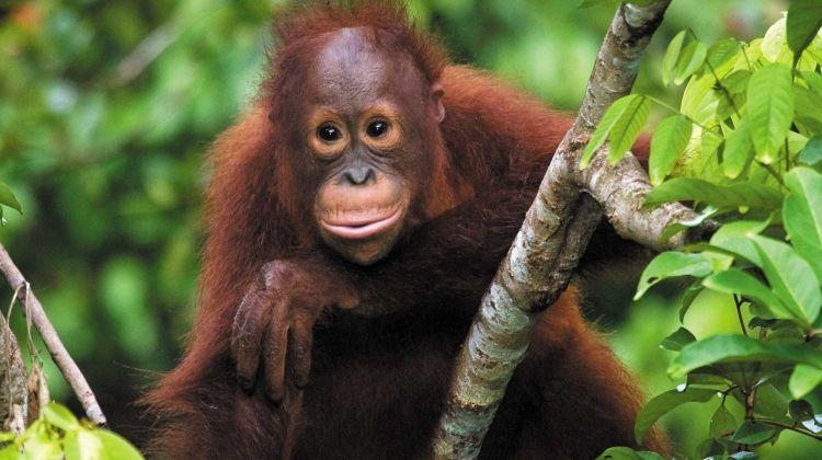 Premium Borneo in Depth