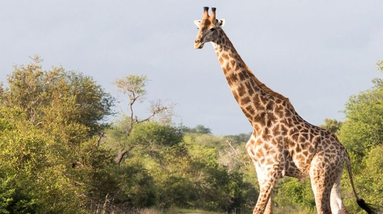 Premium Kenya & Southern Africa Highlights