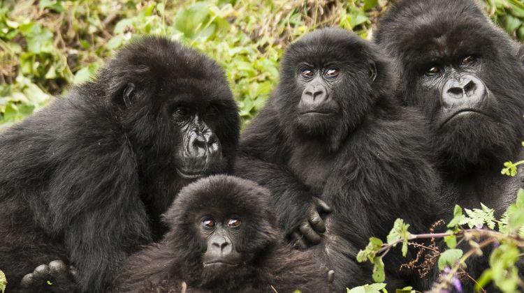 Premium Rwanda & Uganda