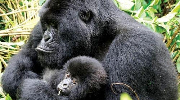 Primates and Wildlife of Uganda