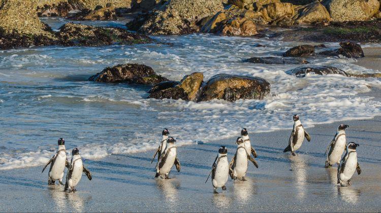 Private Cape Point & Penguins Tour Cape Town