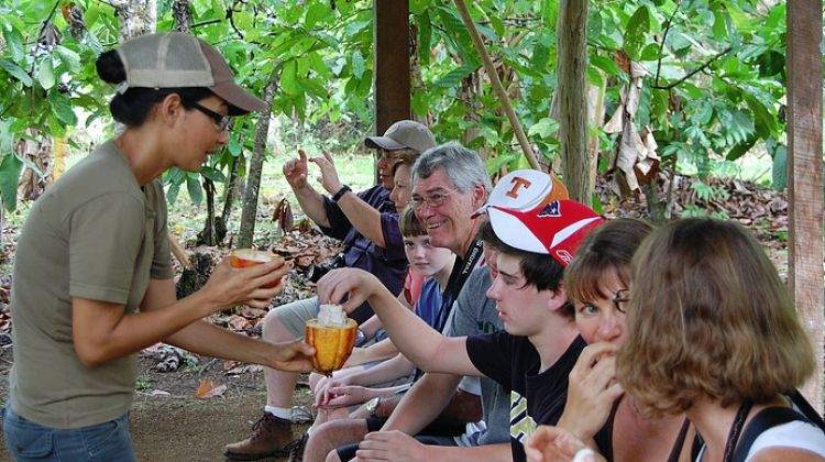 Private Chocolate Tour in the Rainforest & Hanging Bridge