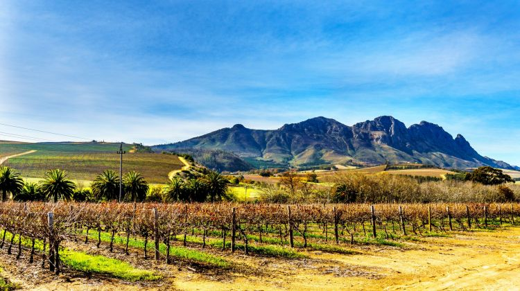 Private Full Day Cape Winelands Tour