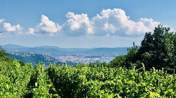 Prosecco Origins Wine Experience