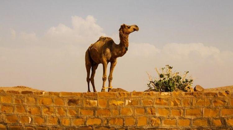 Rajasthan Camel Safari 2D/1N