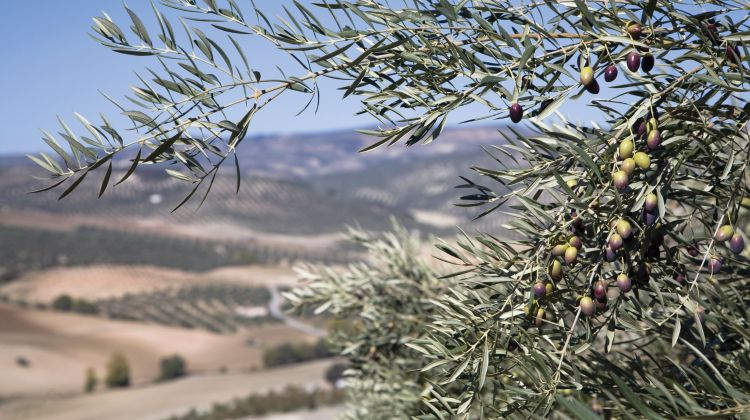 Real Food Adventure - Israel & the Palestinian Territories