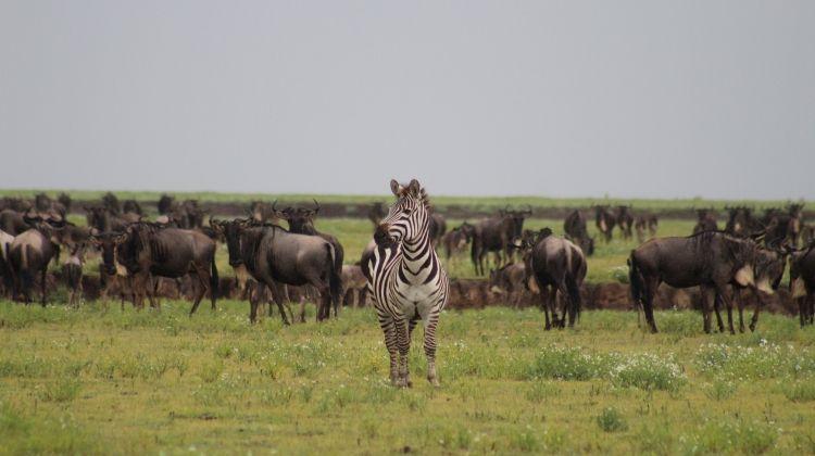 Rediscover Serengeti  Zanzibar 10 Days
