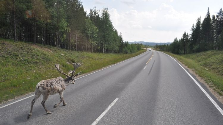 Reindeers and Russians 2018