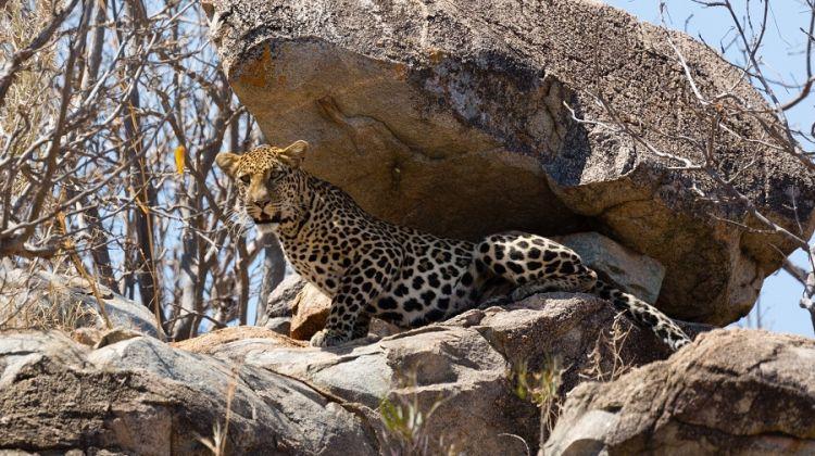 Remote Tanzania: Safari and Beach