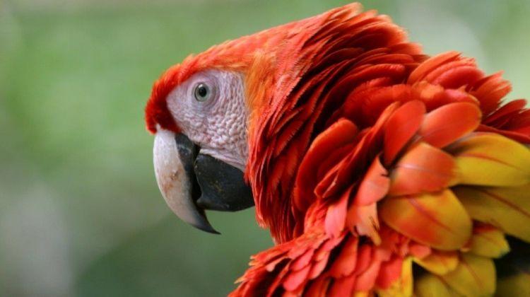 Romantic Adventure In Costa Rica, Self-drive