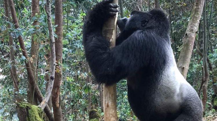 Rwanda & Uganda Gorilla Trekking: Eight Days