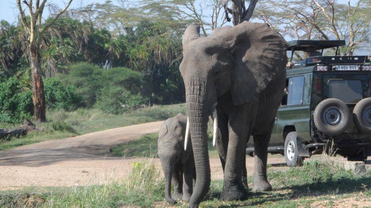 Safari Adventure in the Wild : A Tanzania Overview