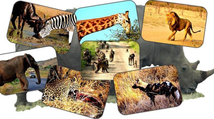 Safari to Hluhluwe Imfolozi Game Reserve