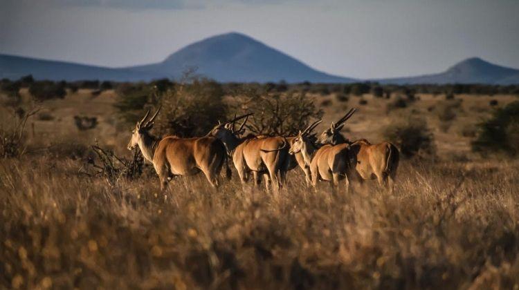 Safari To The Shimba Hills, Ngutuni & Salt Lick, Short Break