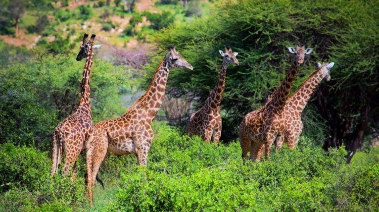 Safari To The Shimba Hills, Short Break