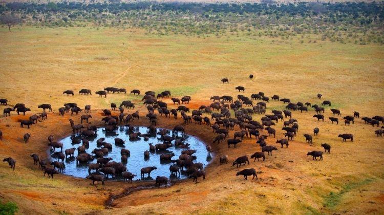 Safari To Tsavo East, Short Break