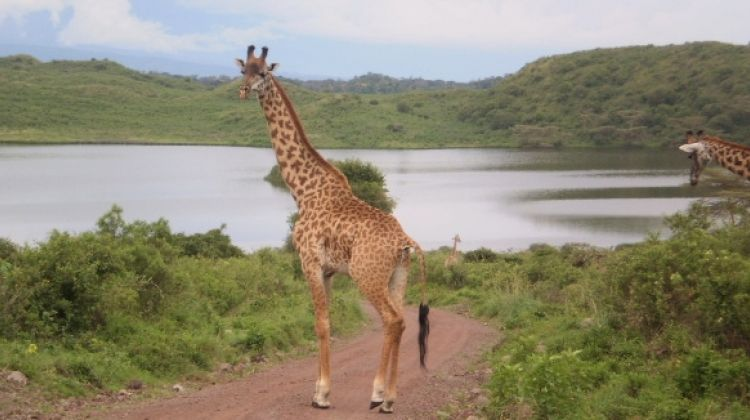 Safaris in the best Northern National Parks of Tanzania