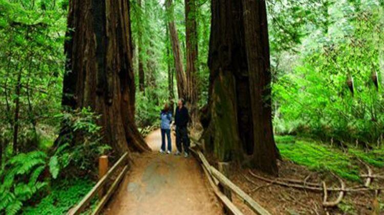 San Francisco City + Muir Woods Tour
