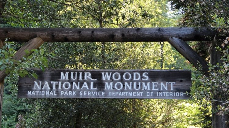 San Francisco's Muir Woods & Wine Tours