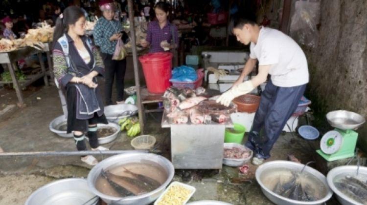 Sapa - Ha Long Bay Experience