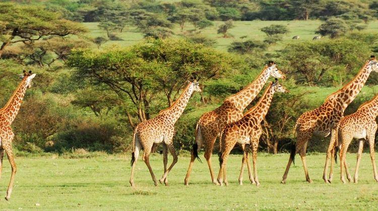Serengeti & Ngorongoro Experience - Independent