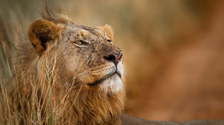 Serengeti and Ngorongoro Safari: 3 Days