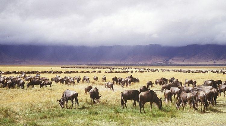 Serengeti Migration 6 Days 5 Nights Lodge Safari