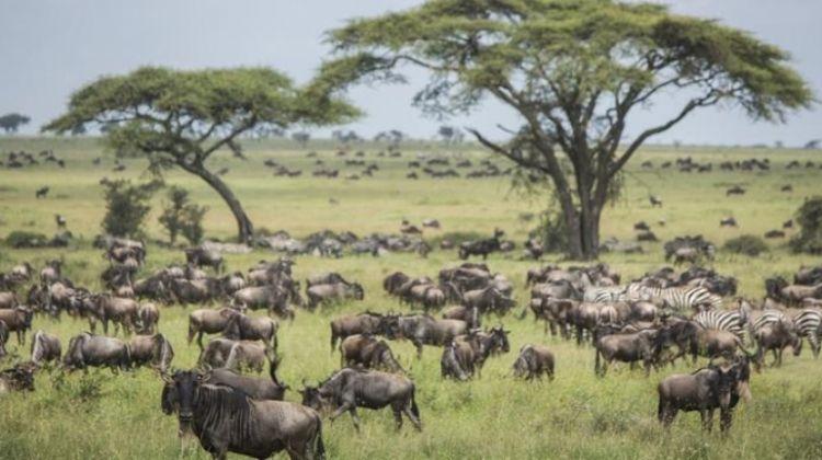 Serengeti Migration Safari