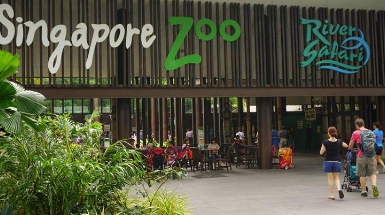 Singapore Zoo Tour + 2 ways shuttle