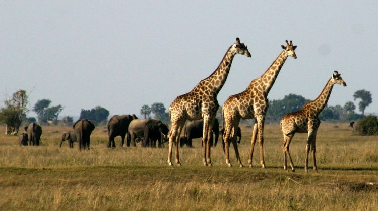 Six Day Hwange National Park and Victoria Falls Combo