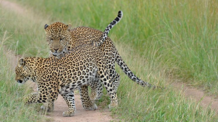 Six Days' Best of Kenya Budget Safari