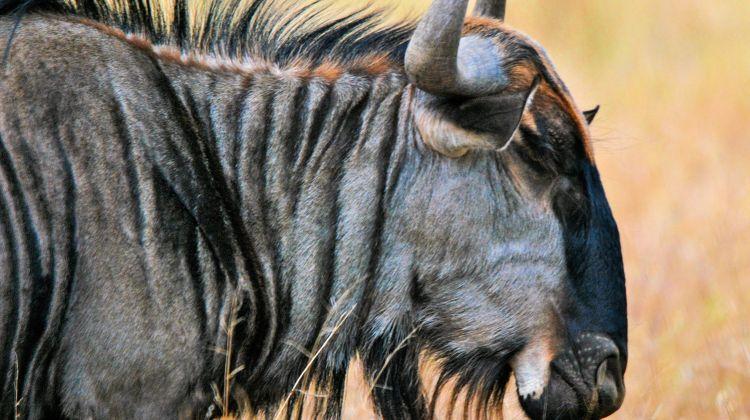 Six-Days Masai Mara, Amboseli  Wildlife Safari