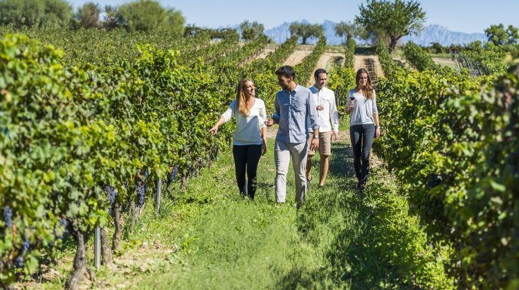 Small Group: Vip Wine & Cava Experience