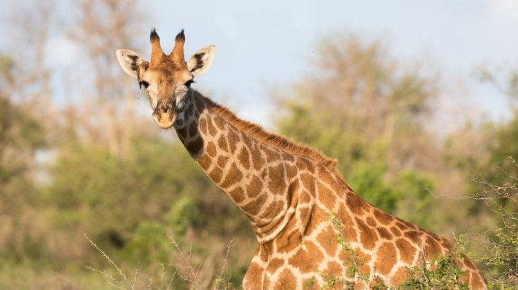 South Africa's Kruger & Cape Town: Hike, Bike & Kayak