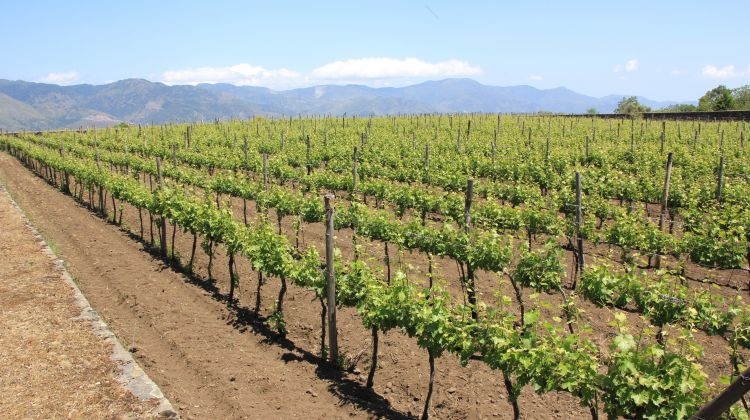 South and Sicily Wine & Cuisine