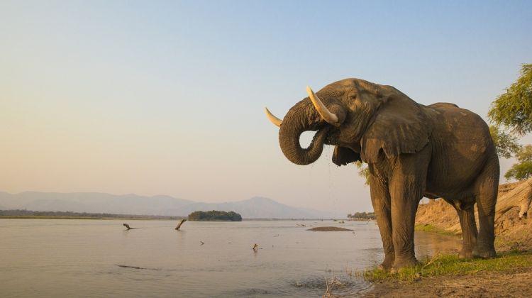 South Luangwa & Lower Zambezi Safari