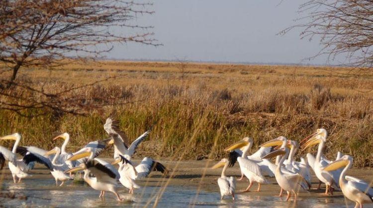 South West Safari-Accommodated