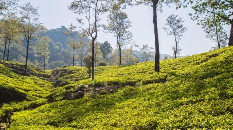Sri Lanka Expedition: Village & Tea Treks