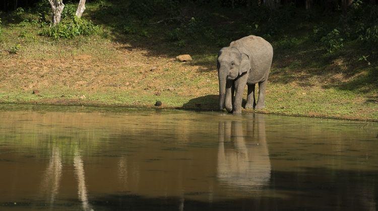 Sri Lanka in Depth