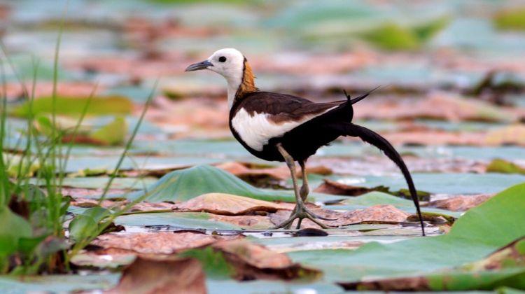 Sri Lankan Wildlife Photography Tour: 5 Days