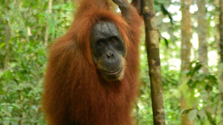 Sumatra Adventure