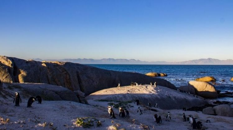 TailorMade Southern Africa: Cape Town, Safaris & Victoria Falls