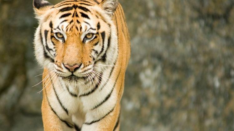 Taj And Tigers, Private Tour