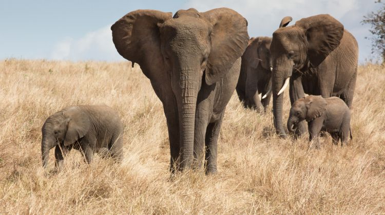 Tanzania Big Five Tour And Hunting With The Hadzabe