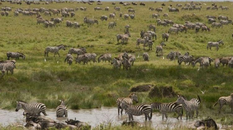 Tanzania Ndutu Safari: Three Days
