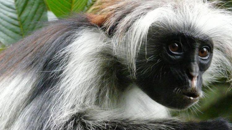 Tanzania Safari: 3 Day