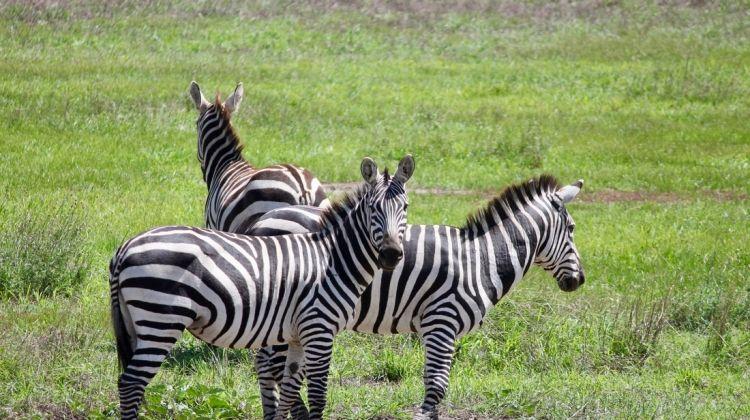 Tanzania Safari under Canvas
