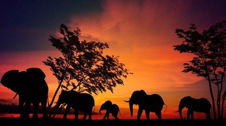 Tanzania Wildlife Encounters