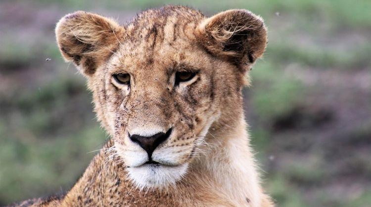 Tanzania Wildlife Safari Moshi Start 6 Days